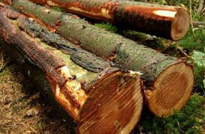 Vente de bois aux enchères